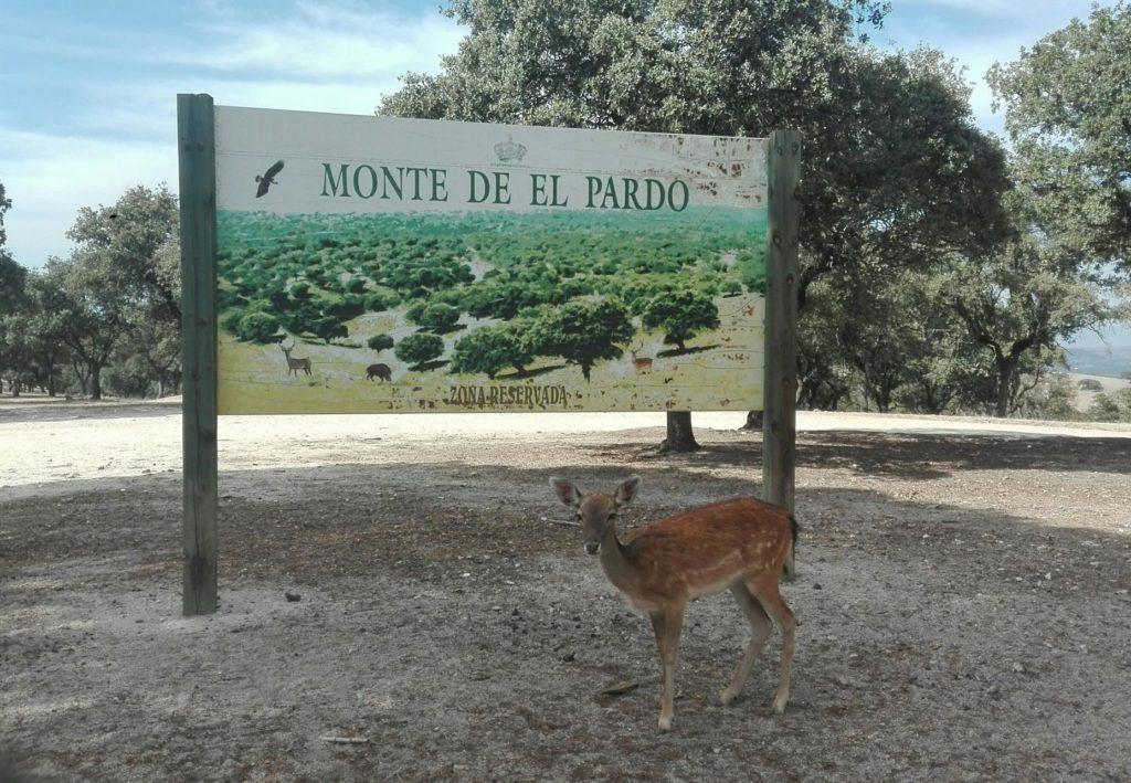 Monte De El Pardo El Pardo